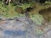 Rzeka Biała Woda