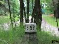 Słupek w lesie