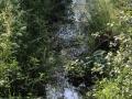 Czarna-Struga-Nowogrod-Bobrzanski-Klepina-Zrodlo-rzeki (15)