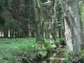 Czarna Struga - Klepina - Kaczenice (13)