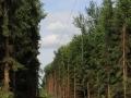 Jarogniewice---Ksiaz-Slaski-(25)