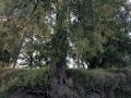 Roślinność nad Odrą