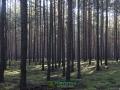 Krzystkowicki las