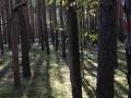 Płot w lesie