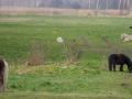 Mirocin-Gorny-pastwisko-konie_1