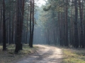 Nowosolskie lasy