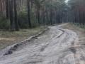 Leśna droga do Starego Stawu