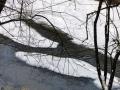 dolina-pliszki-rzeka-zima-12