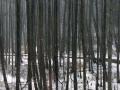 dolina-pliszki-rzeka-zima-2
