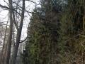 dolina-pliszki-rzeka-zima-26