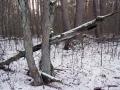 dolina-pliszki-rzeka-zima-36