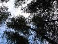 pliszka-przyroda-10