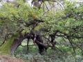 pliszka-przyroda-12