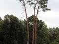 pliszka-przyroda-5