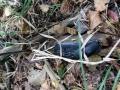 pliszka-przyroda-6