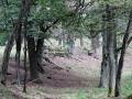 pliszka-przyroda-7