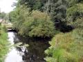 pliszka-rzeka-3