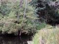 pliszka-rzeka-4
