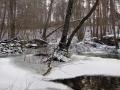 rzeka-pliszka-kokoszka-sadow-19