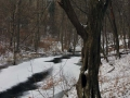 rzeka-pliszka-kokoszka-sadow-20