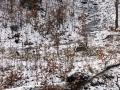 rzeka-pliszka-kokoszka-sadow-21