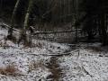 rzeka-pliszka-kokoszka-sadow-27