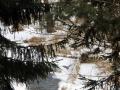 rzeka-pliszka-kokoszka-sadow-5
