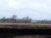 Ptaki na polanie obok rezerwatu.