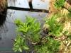 Roślinność wodna
