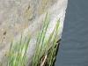 Kiełkujące trawy