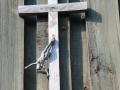 Niszczejący krzyż na dzwonnicy.