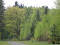 Lubuskie lasy