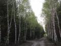 Droga do Ciepielowa