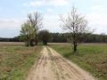 Droga do Drwalewic