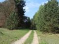 Droga z Ciepielowa do Drwalewic
