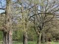 Aleje drzewne