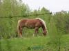 Konie w Bulinie