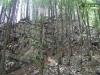 Las na szczycie urwiska