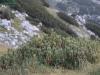 wejscie-na-triglav-wyprawa-w-alpy-julijskie-szczyt-65
