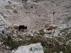 wejscie-na-triglav-wyprawa-w-alpy-julijskie-szczyt-116