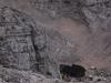 wejscie-na-triglav-wyprawa-w-alpy-julijskie-szczyt-156
