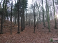 Las na Wzgórzach