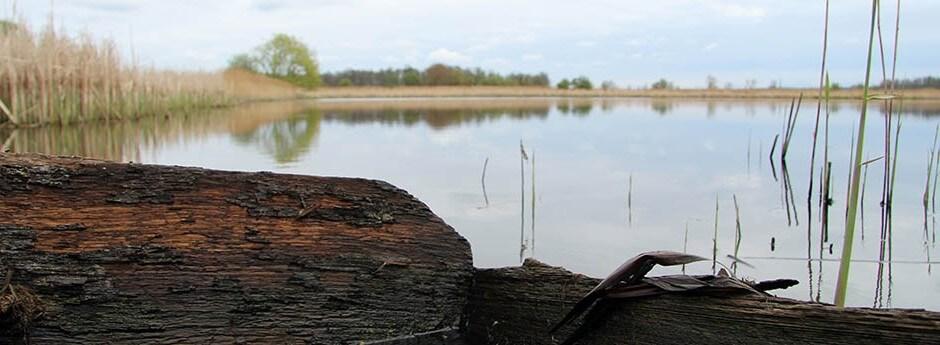 Rezerwat Ornitologiczny - Stawy Przemkowskie