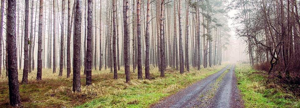 Miedzichowo – Bytom Odrzański, czerwony szlak (180 km)